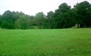 12 Residential Lots - Vinemont