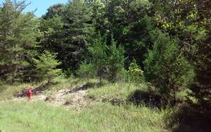 Wooded 15 Acres+/- In Lawrence Co.