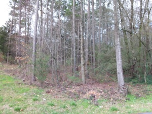5.1 Acres On Hwy. 79