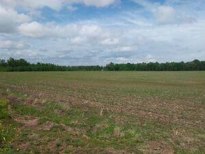 57 Acres± Of Prime Real Estate