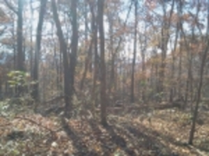 3 Lots On Monte Sano Mountain