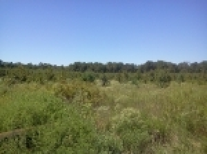 27 Acres± Off Carter's Grove