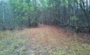 3.2 Acres± in Marshall Co.
