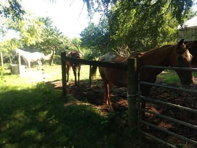 1 Female & 2 Male Horses Selling Together