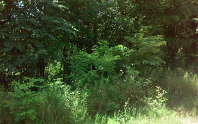 3.58 Acres± of woods on County Road 49 · Russellville, Alabama