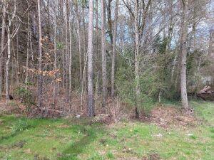 5 Acre± Wooded Lot Off Highway 79 (Marshall County)