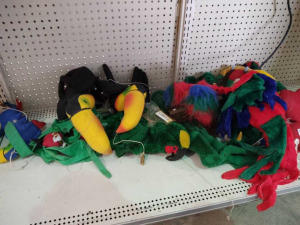 VARIOUS STUFFED BIRDS