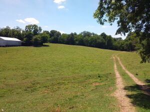 23 Acres± Of Undeveloped Land In Limestone County