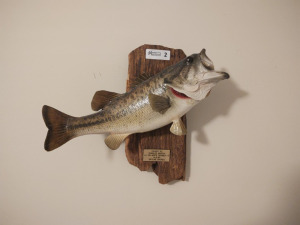 MOUNTED TROPHY FISH