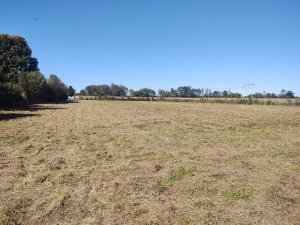 3-ACRES± AS A WHOLE IN FLINTVILLE, TN